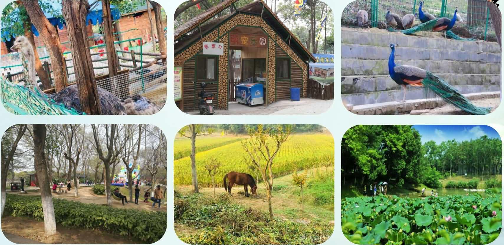 南京江宁景业百果园